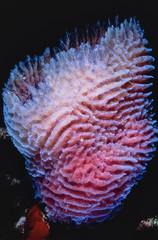 Caribbean Sea, Belize, U.W. photo, tropical Sponge