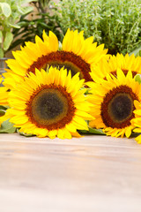 Sunflower and seeds sunflowers