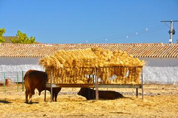 Ganado vacuno, ganado bovino, pasto, paja, fauna