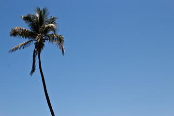 Tall palm tree against a blue sky