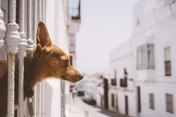 Dog soaking up the sun