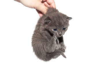 Carrying kitten
