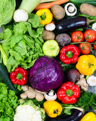 Huge group of fresh vegetables - High quality studio shot