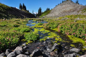 Paradise trail in Mount Rainier National Park, Washington, USA