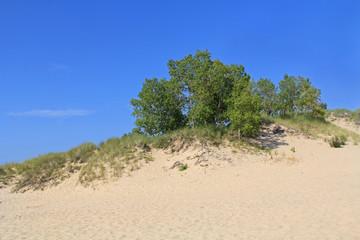 Dunes in Ludington State Park in Michigan