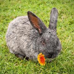 Süßes Kaninchen mit Blümchen im Mäulchen
