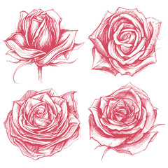 Roses Drawing set 002
