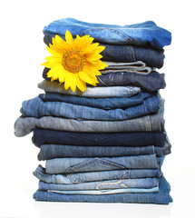 Pile of blue jeans and sunflower