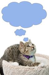 Thinking Kitten
