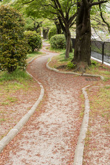 The trail covered with pink flower petals of sakura.