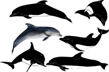 six dolphins collection isolated on white