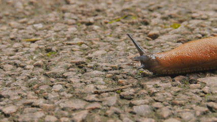Crawl slowly slug,Crawl slowly slug,Crawl slowly slug,