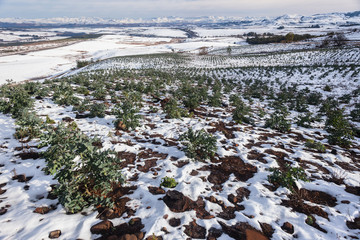 Forestry Young Trees Hillside Valley Landscape Snow Mountains