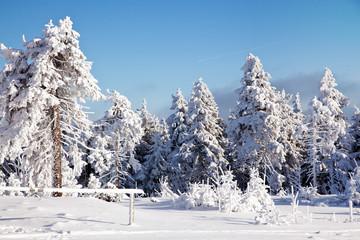 Winterwald 577