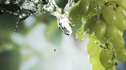Washing a bunch of fresh healthy green grapes