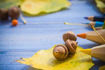 Autumn back school acorns and school