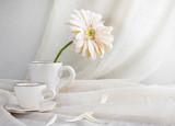 Still life white gerbera cup