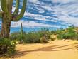 Zdjęcia na płótnie, fototapety, obrazy : Cactus