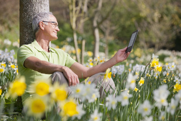Man using digital tablet in sunny daffodil field