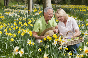 Senior couple with basket and hat picking daffodils in sunny field
