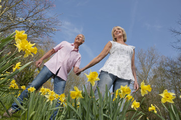 Smiling senior couple holding hands and walking in sunny daffodil field