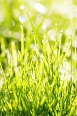 nahaufnahme von gras mit tau