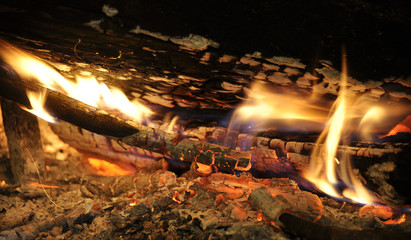 Wood logs burning