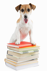 Cute happy dog a lot of books