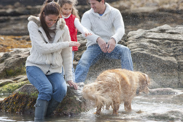 Dog Spraying Family After Swim In Sea