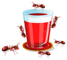 Juice and ants
