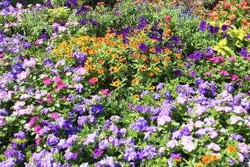 Flowers - Salt Lake City Temple