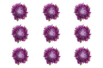 Nine asters flowers on a white background to use as a background