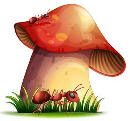 Closeup mushroom
