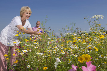 Smiling couple picking wildflowers in sunny meadow