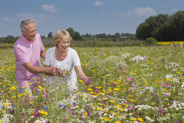 Smiling couple walking among wildflowers in sunny meadow