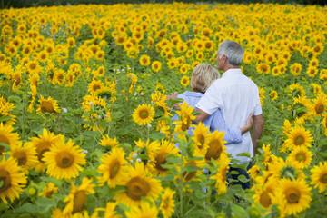 Couple hugging among sunflowers in sunny meadow