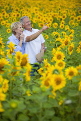 Smiling couple pointing among sunflowers in sunny meadow