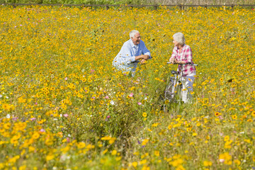 Couple on bicycles among wildflowers in sunny meadow