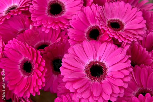 Papiers peints Gerbera A bouquet of gerberas. Floral background.