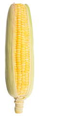 Sweet corn over white background