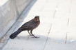 canvas print picture - beautiful little bird