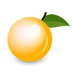 Vector illustration of shiny apricot