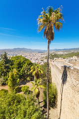 Palm tree, and Malaga city in the background, Spain.