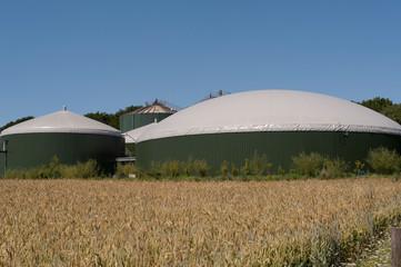 Kornfeld vor Biogasanlage