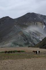chevaux islandais et montagne verte
