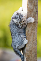 Kitten learn to climb a tree
