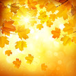Autumn leaves - 69323611