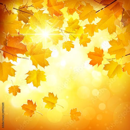 Autumn leaves - 69323611