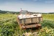 beladener Traktor im Feld