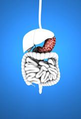 Apparato digerente, stomaco e ulcera, organi interni